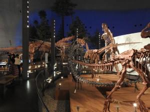広くて大きくて、恐竜時代を想像できます。