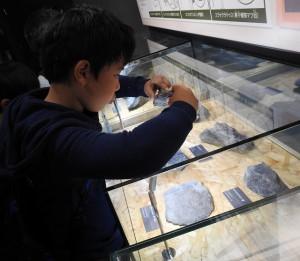 自分で掘った化石の種類を確かめる健真くん。真剣なまなざし。